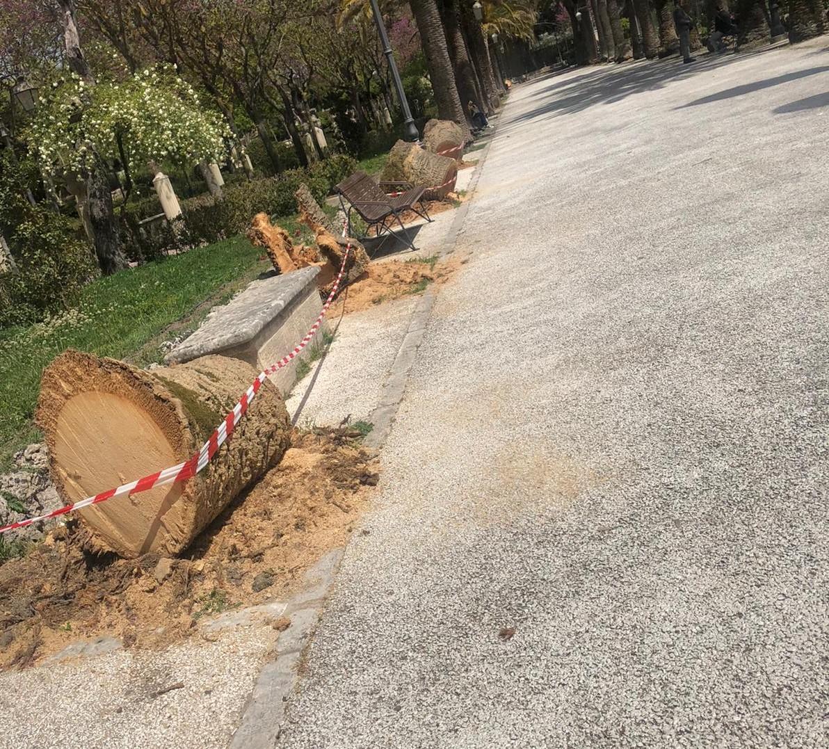 Ragusa, Chiavola (Pd): la cura del verde nei giardini iblei lascia molto a desiderare