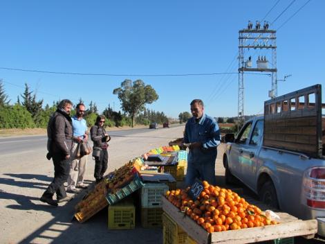 Europee, Luca Cannata (Fdi): mi impegno a bloccare l'import della arance dalla Tunisia