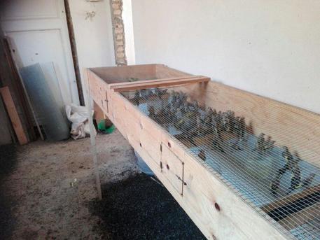 Sequestrati 570 uccelli di specie protette a Reggio Calabria