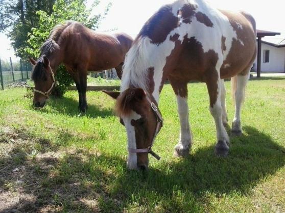 Morta all'ospedale di Udine la ragazzina caduta dal cavallo