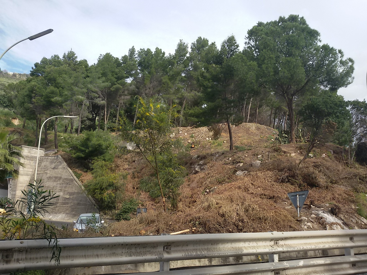 Abbattuti ulivi a Taormina, ambientalisti in rivolta