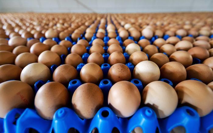Francia, 48 mila uova contaminate in supermercati