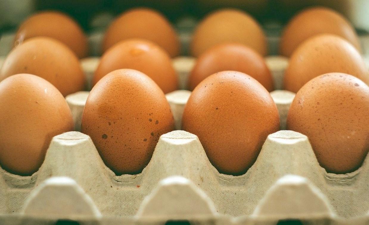 Uova piemontesi a rischio, Polo avicolo di Modica: produzione siciliana sicura
