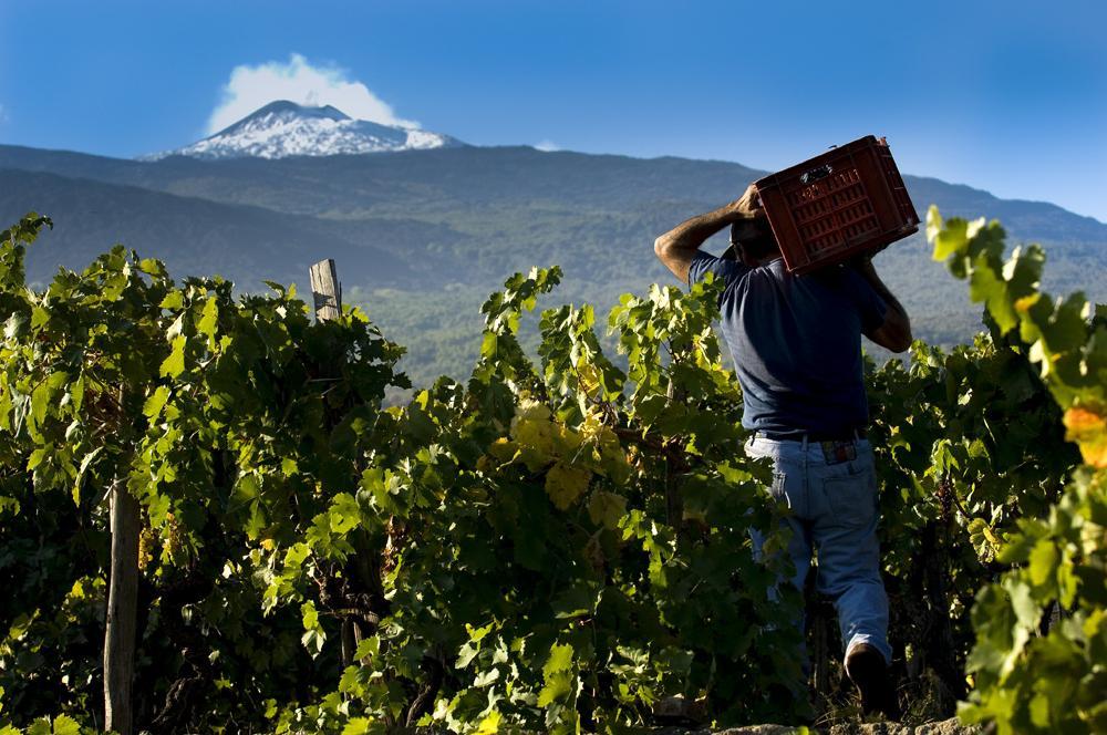 Agroalimentare, prezzi alle stelle per l'uva dell'Etna