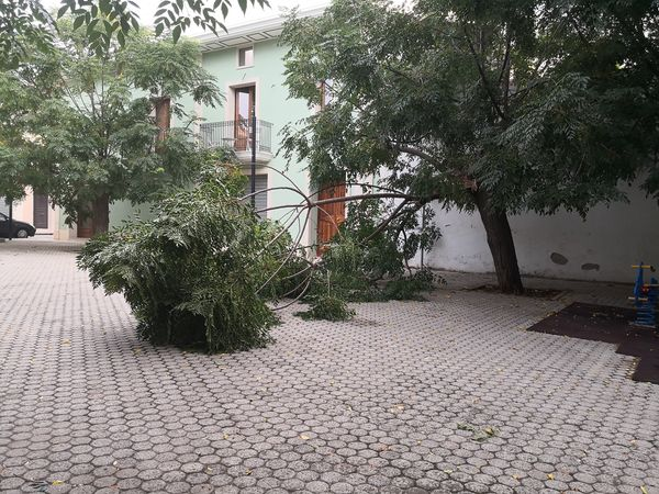 Floridia, crolla un albero nella piazzetta a 'Chianu i Masciu Vartulu'