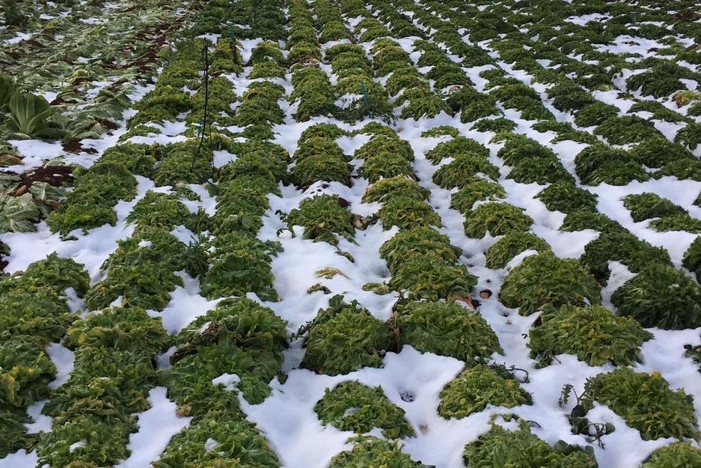 Gelate distruggono ortaggi nella zona di Vittoria
