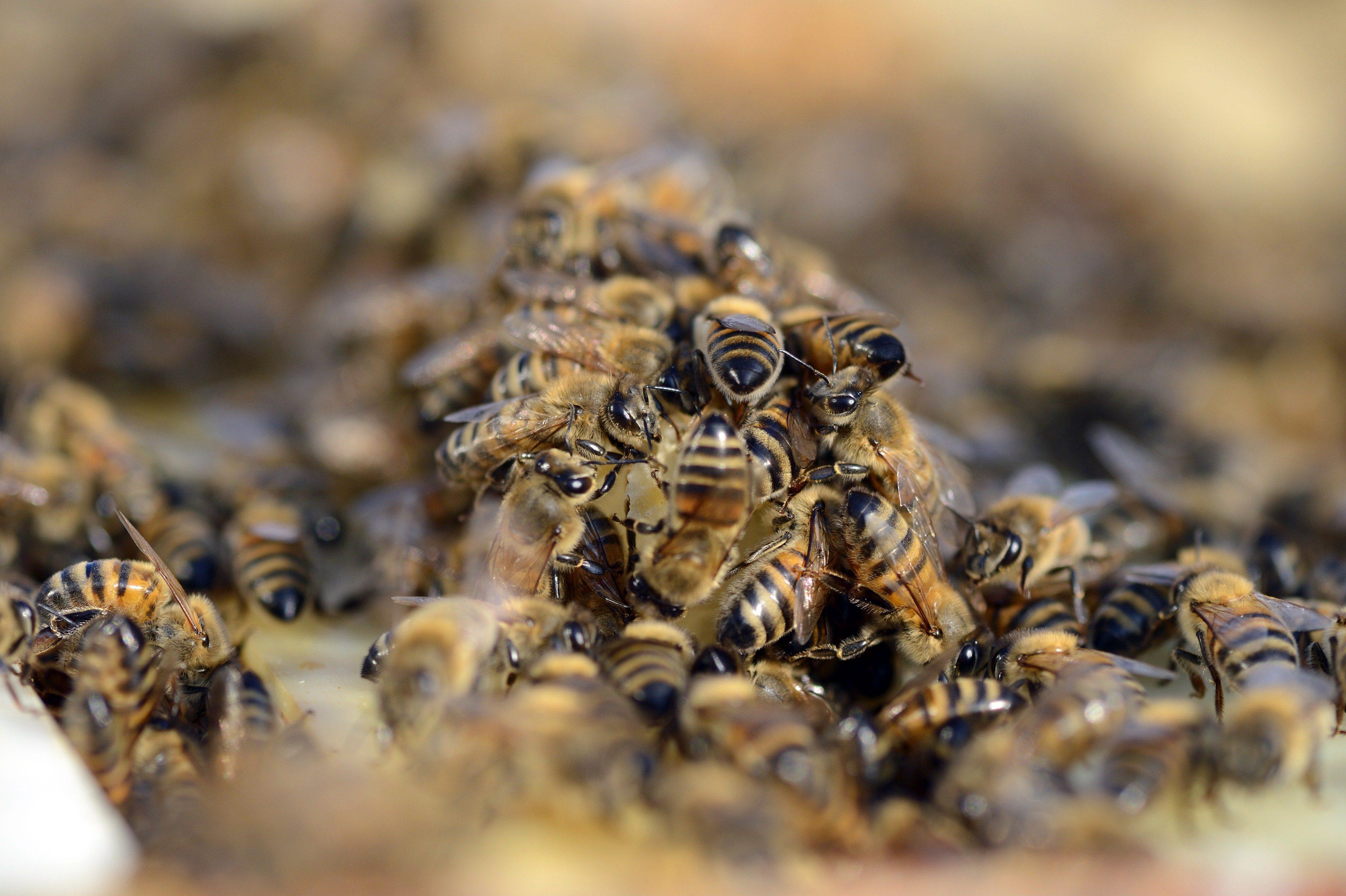 Pensionato di Floridia assalito dalle vespe muore per uno choc anafilattico