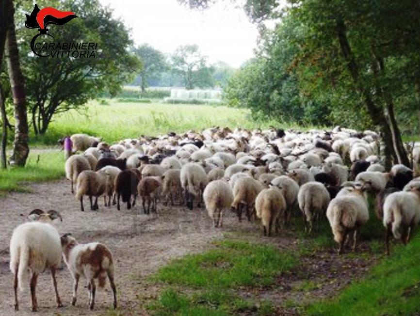 Vittoria, 5 pastori denunciati per pascolo abusivo