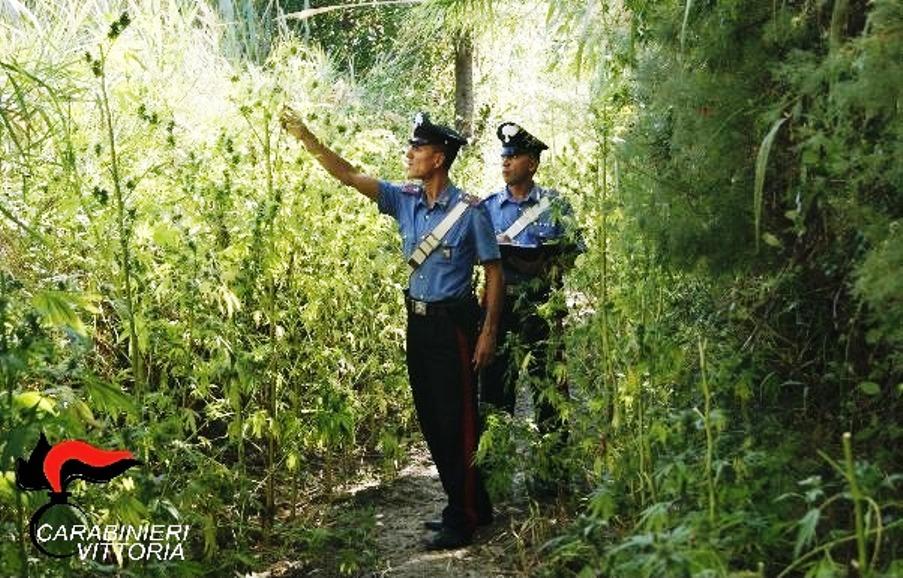 Vittoria, squestrata piantagione di marijuana sul fiume Ippari