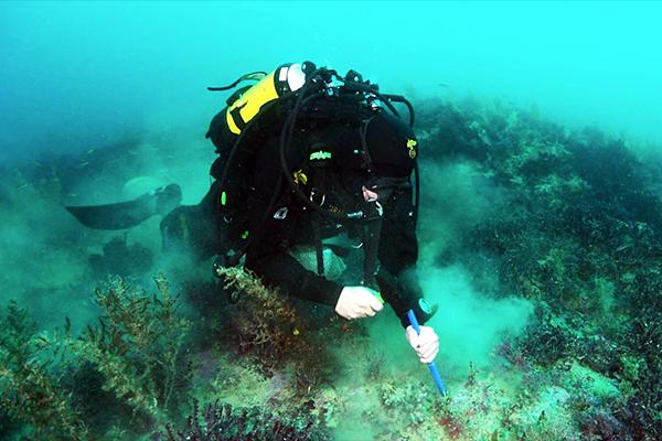 Studio Ingv: due campi vulcanici sottomarini vicini alle coste di Sciacca