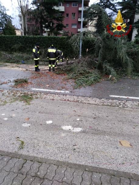Maltempo, cade un albero in Irpinia: evacuata un'abitazione